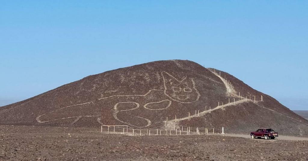 Gato gigante Perú