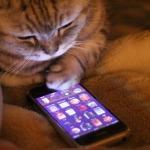 MeowTalk la app para hablar con tu gato